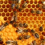 beehive honeycomb beeswax propolis