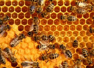 Vegan Makeup Brands on Beehive Honeycomb Beeswax Propolis