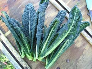 kale chips plainleaved vegan kale cheesy chips