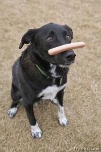 patience dog with hotdog