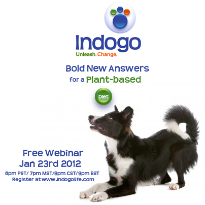 vegan dog diet webinar image indogo